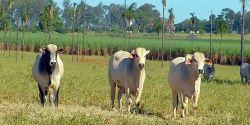 Aumento no preço dos insumos encarece engorda do gado